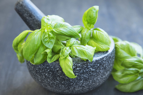 Everything you need to know about basil